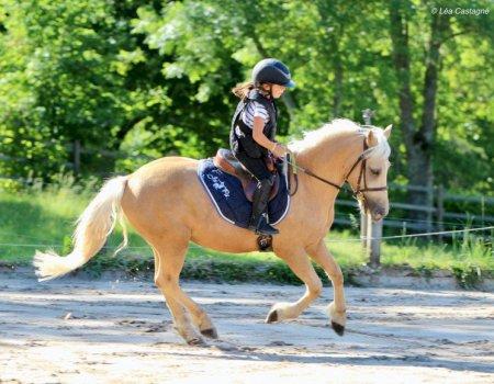 Stage poney ou cheval