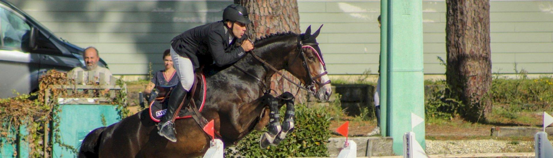 location/ventre de chevaux et de poneys